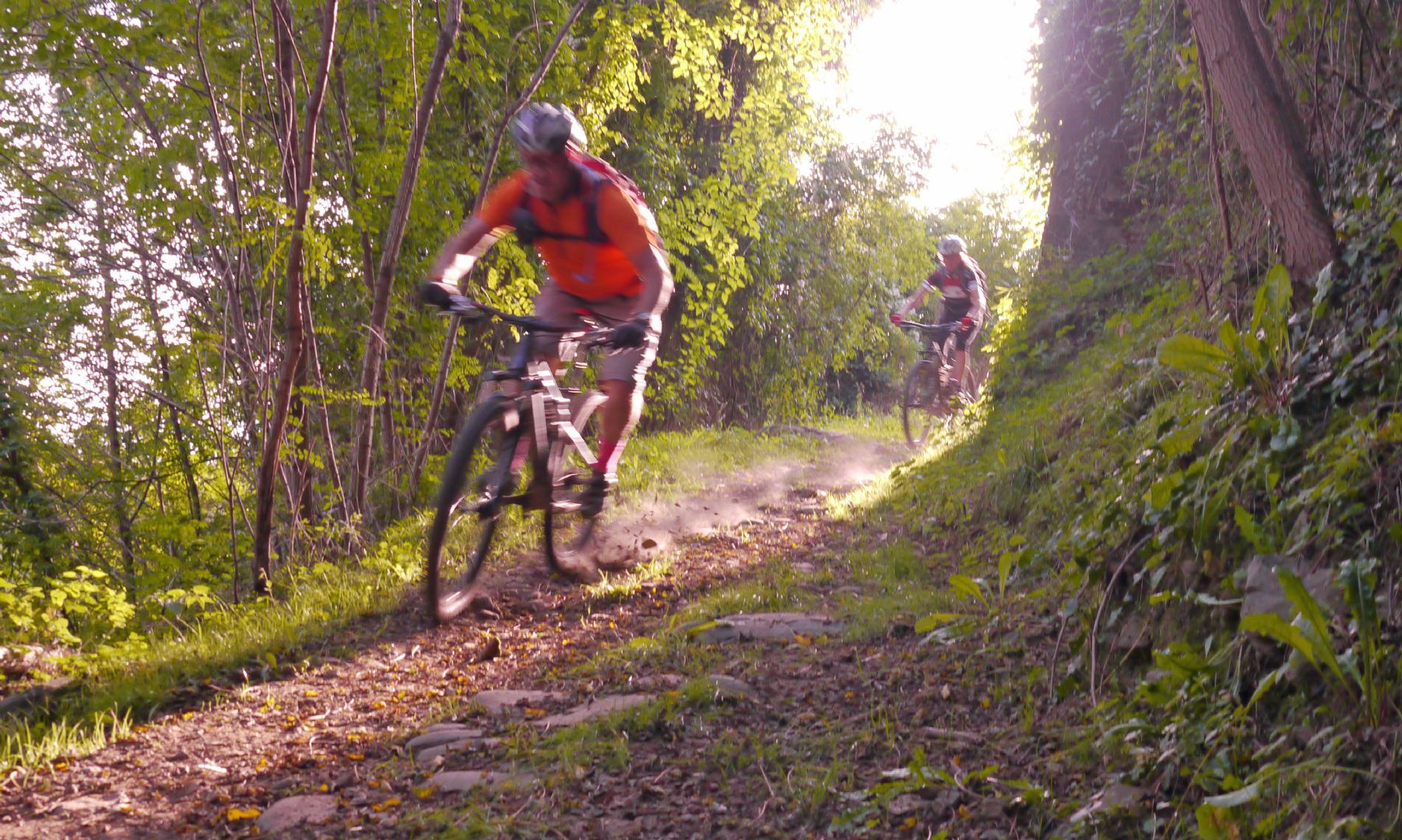 Backlit speedyness.jpg - Italy - Tuscany - Secret Apennine Trails - Italia Mountain Biking