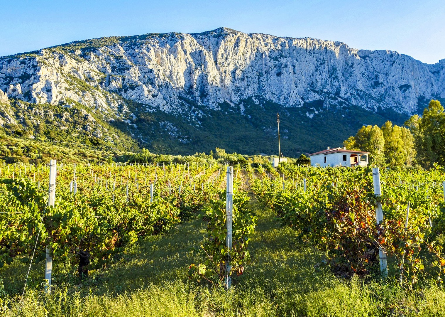 Su Gologne - vineyard and mountains-2.jpg - Italy - Sardinia - Island Flavours - Italia Leisure and Family Cycling