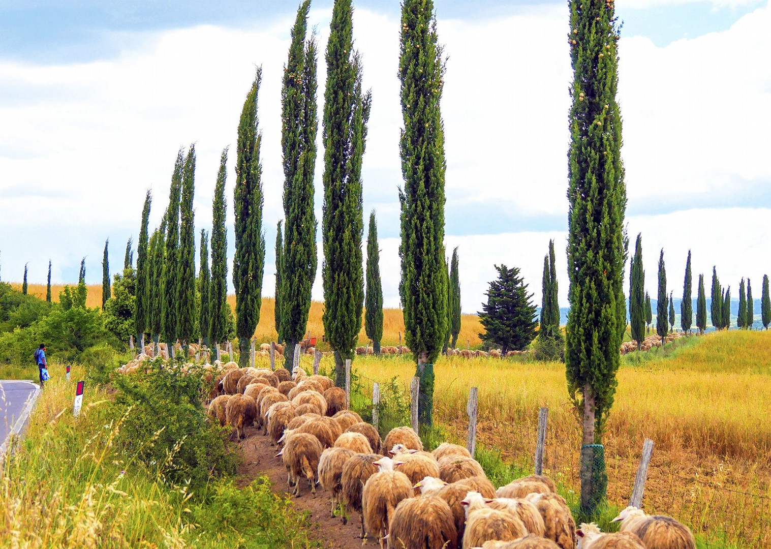 farms-and-cypress-trees-regional-life-culture-cycling-holiday-saddle-skeaddle.jpg - Italy - Classic Tuscany - Self-Guided Leisure Cycling Holiday - Italia Leisure and Family Cycling