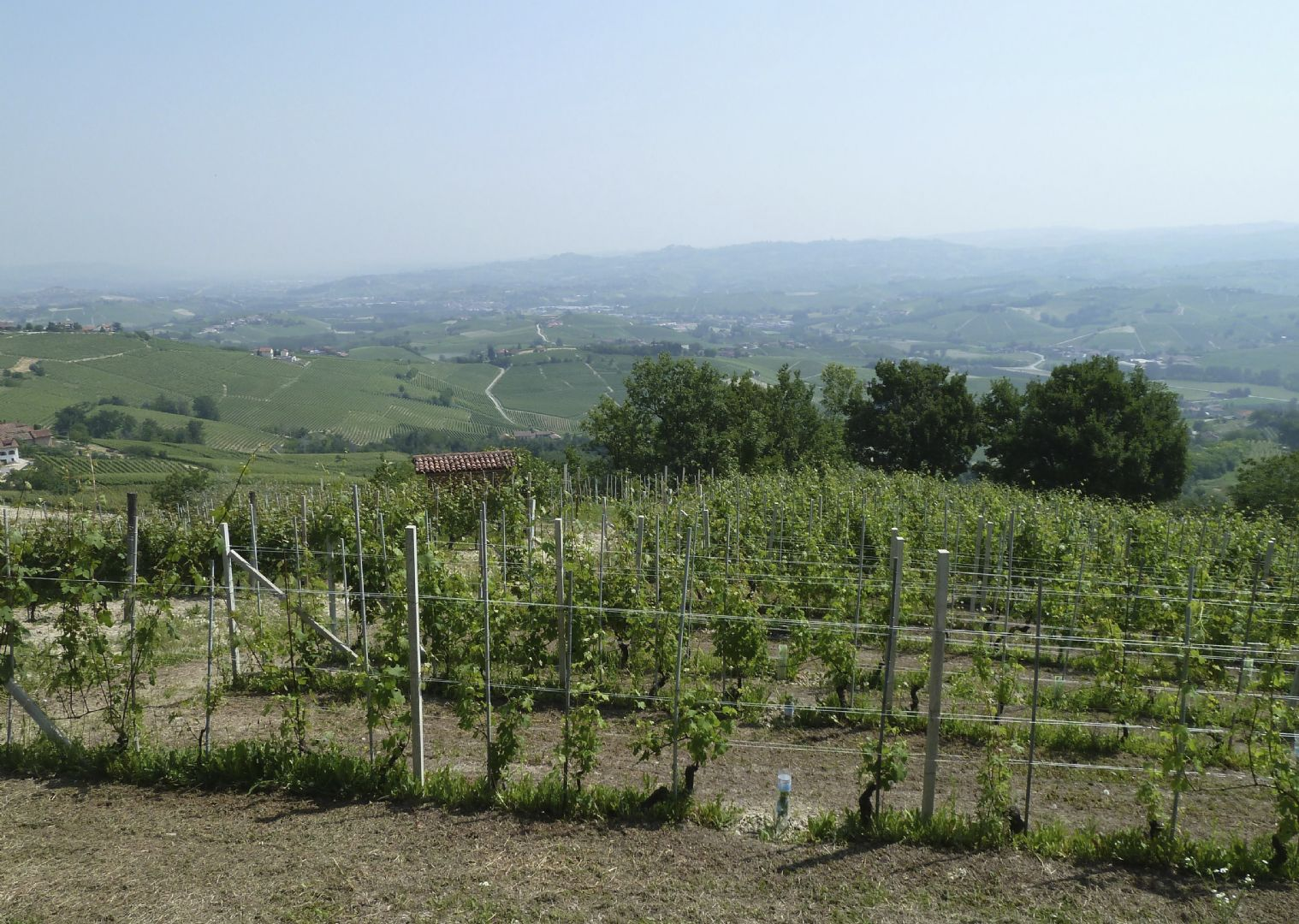 _Customer.27713.17339.jpg - Italy - Piemonte - Vineyards and Castles - Leisure Cycling Holiday - Guided - Italia Leisure and Family Cycling
