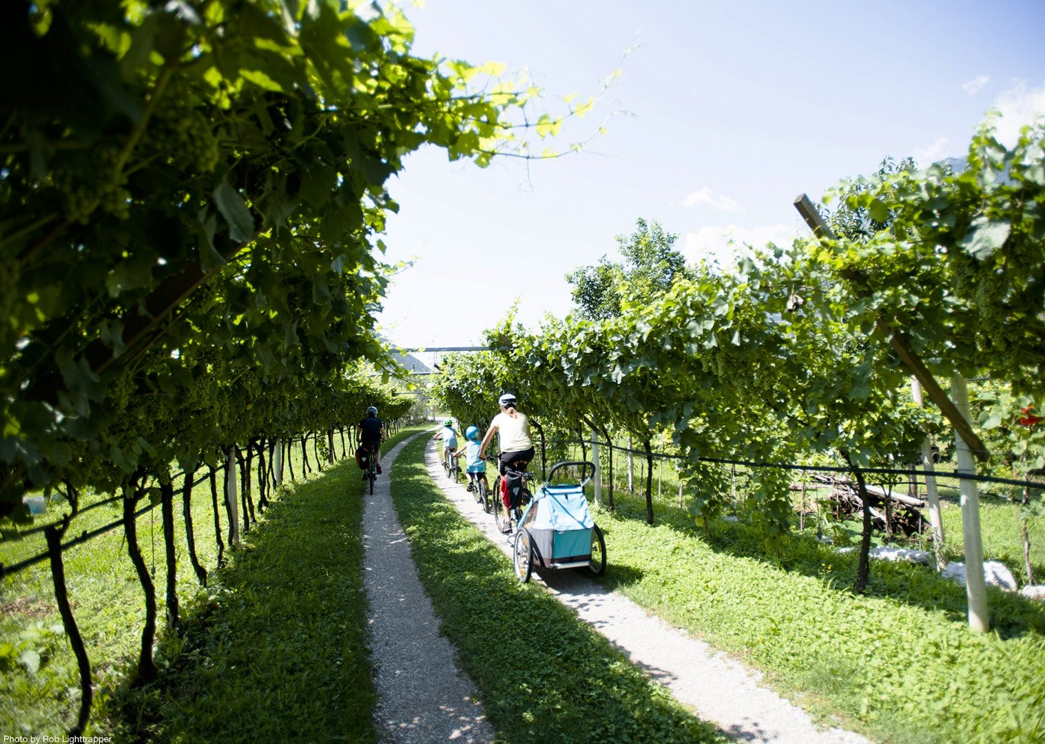vineyard-italy-cycling-self-guided.jpg - Italy - Lake Garda Explorer - Self-Guided Family Cycling Holiday - Italia Leisure and Family Cycling