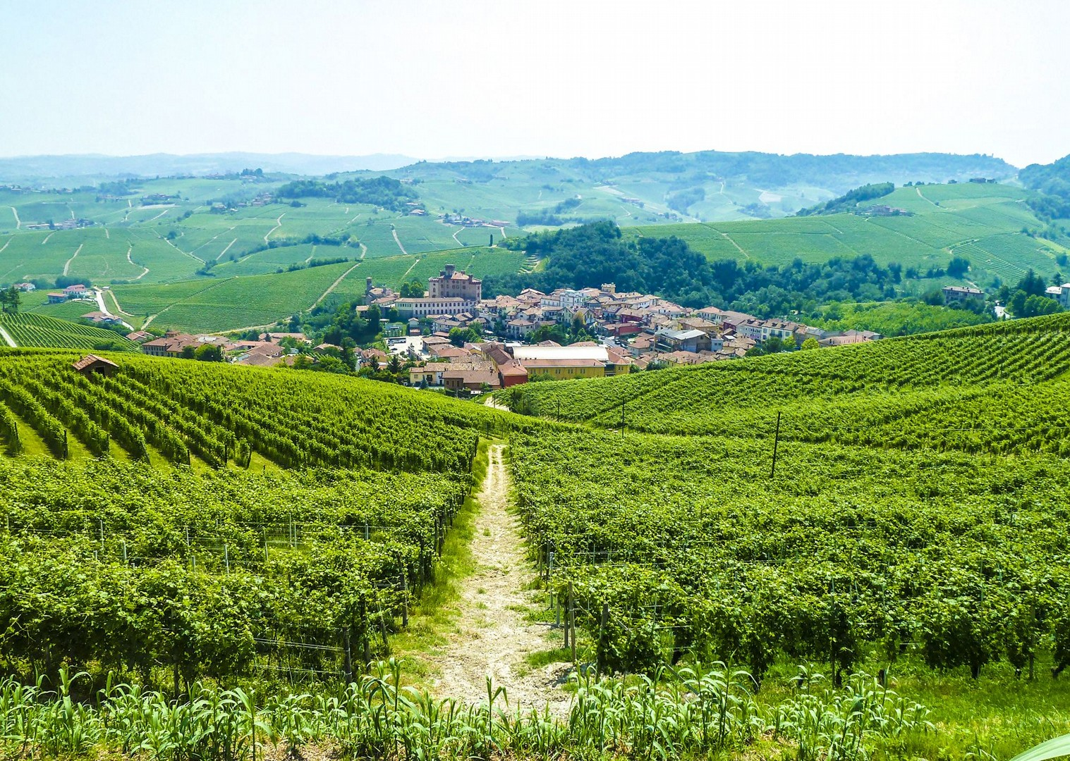 wine-country-easy-cycling-ebike-electric-bike-tour-holiday-italy-piemonte.jpg - Italy - Piemonte - Vineyards and Views - Self-Guided Leisure Cycling Holiday - Italia Leisure and Family Cycling