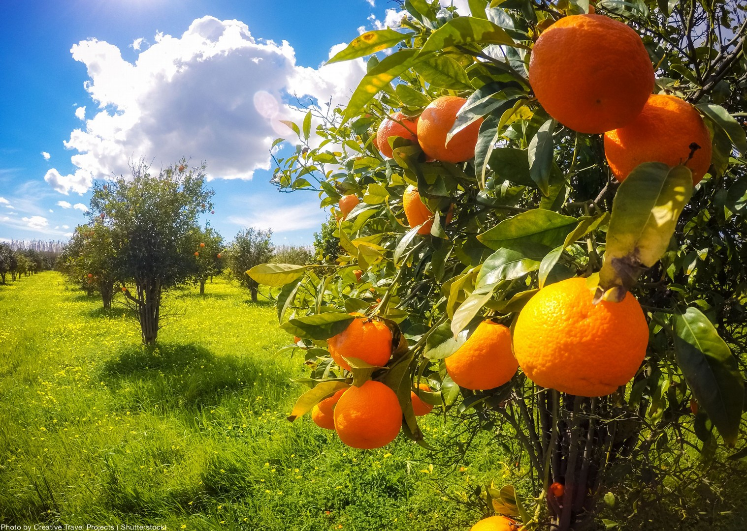 local-nature-orchards-italy-leisure-biking-fun.jpg - Italy - Sicily - Self-Guided Leisure Cycling Holiday - Italia Leisure and Family Cycling