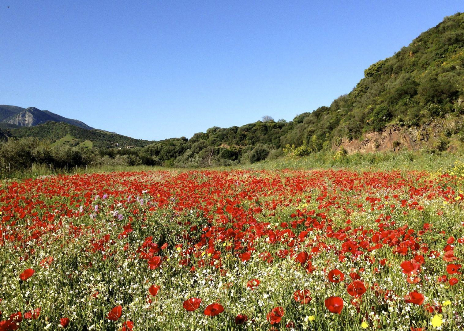 _Customer.86943.9734.jpg - Italy - Sardinia - Coast to Coast - Self-Guided Road Cycling Holiday - Italia Road Cycling