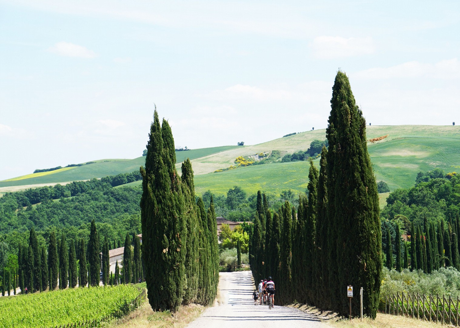 groves-italy-tuscany-cycling-holiday.jpg - Italy - Tuscany Tourer - Guided Road Cycling Holiday - Italia Road Cycling