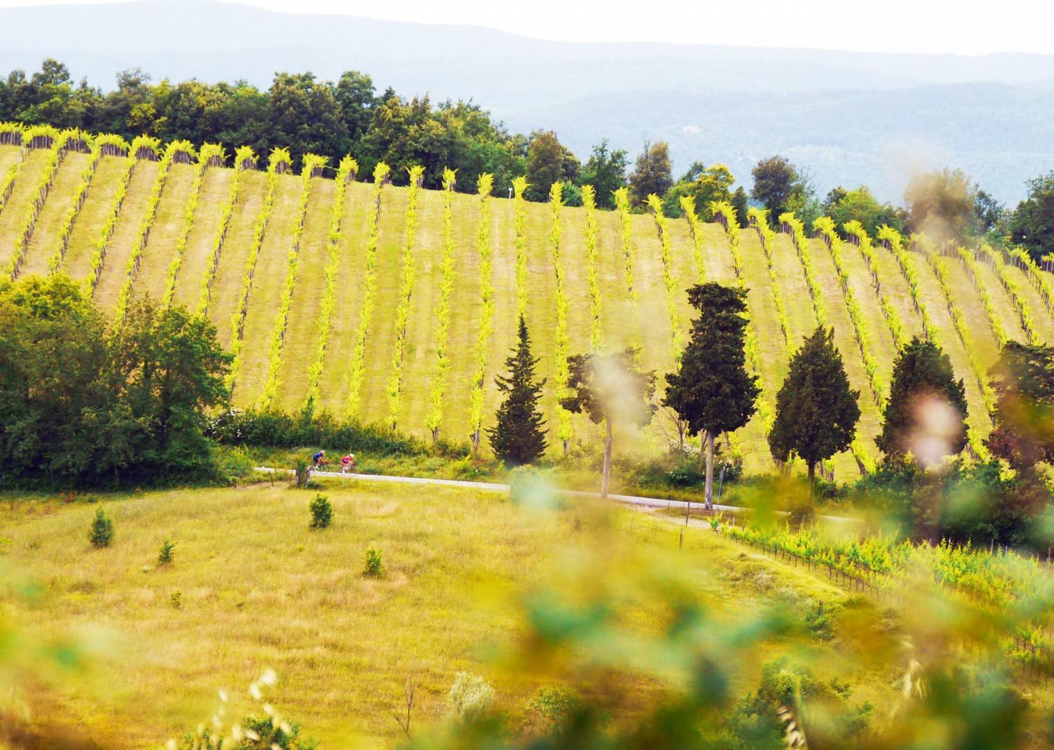cycling-vineyards-tuscany-italy-holiday.jpg - Italy - Tuscany Tourer - Guided Road Cycling Holiday - Italia Road Cycling