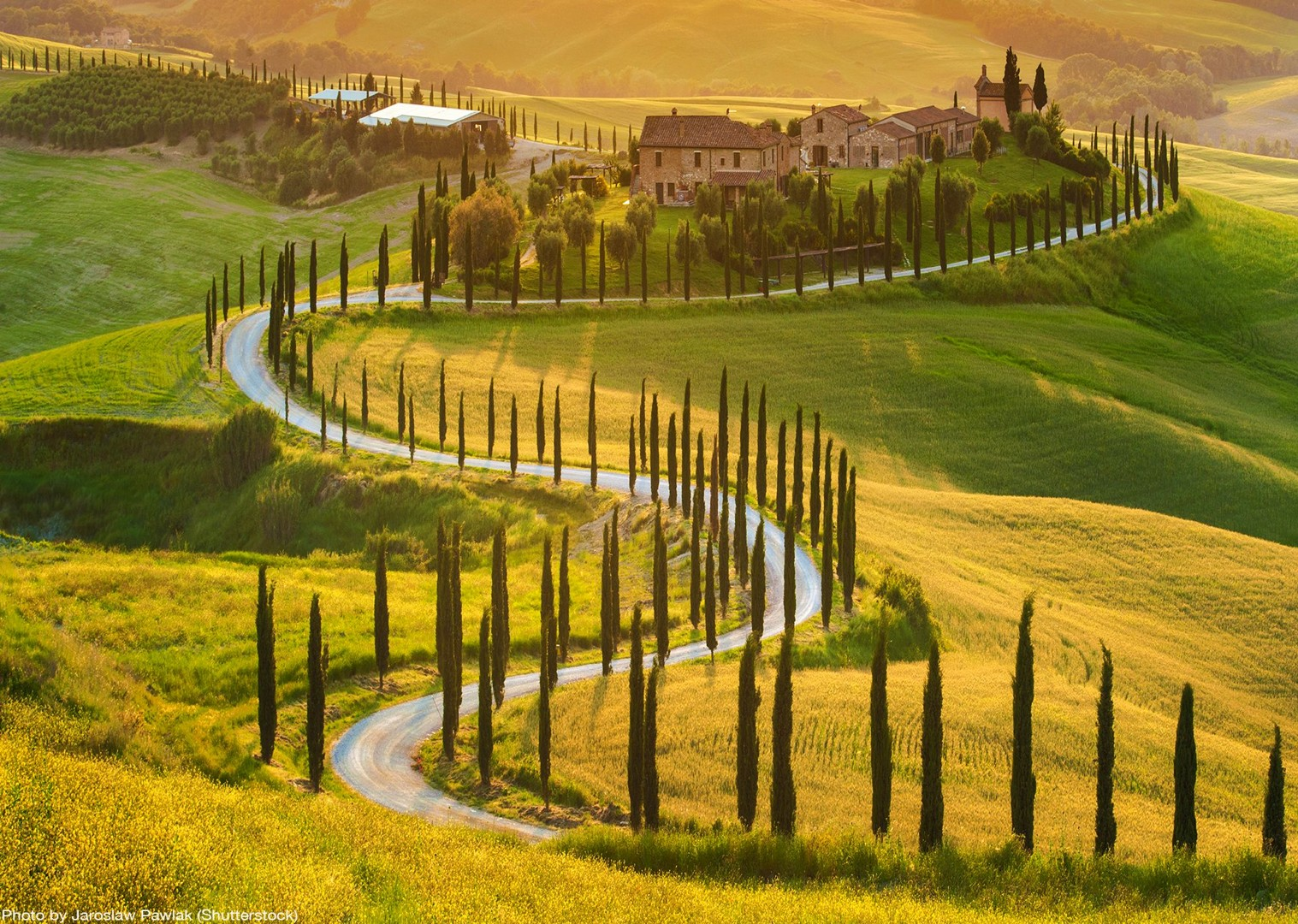 cypress-snakes-tuscany-leisure-bike-tour-guided.jpg - Italy - Tuscany - Giro della Toscana - Self-Guided Road Cycling Holiday - Italia Road Cycling