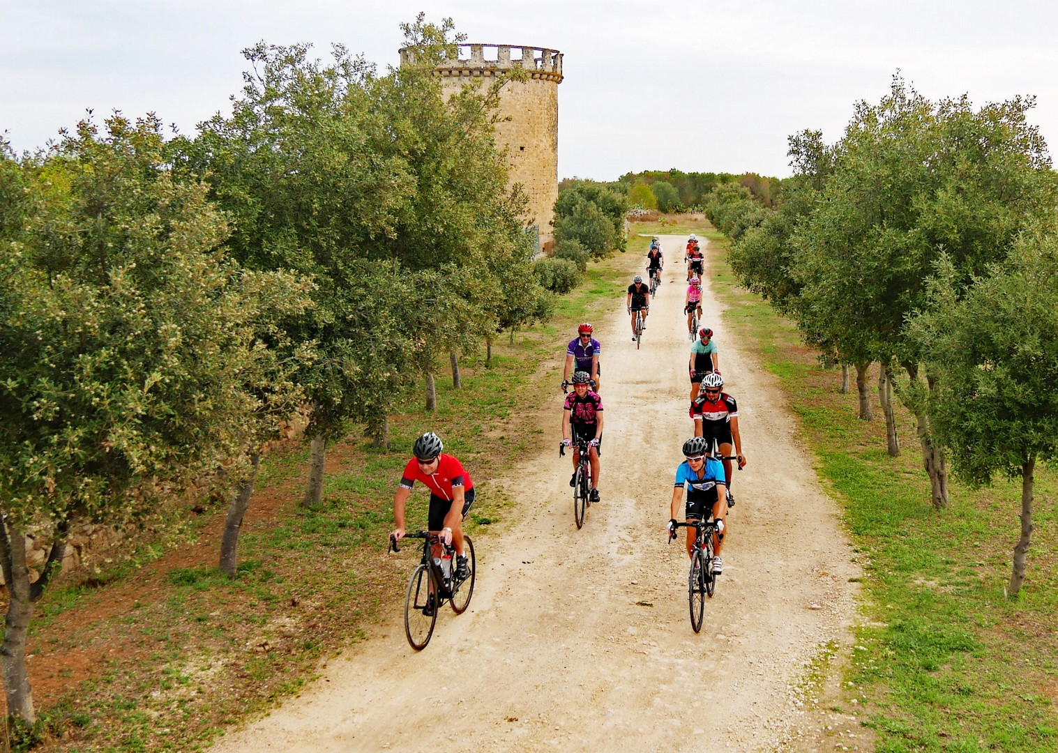 guided-road-cycling-adventure-through-olive-groves.jpg - Italy - Grand Traverse - South to North (22 days) - Guided Road Cycling Holiday - Italia Road Cycling